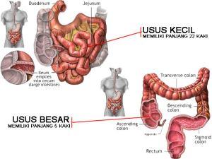 struktur-usus